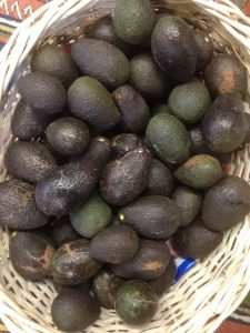 An abundance of Hawke's Bay avocados
