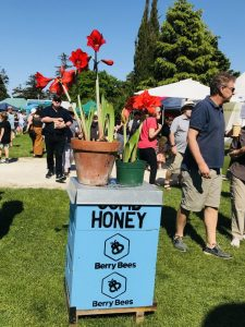 Honey & plants at the Hawke's Bay Farmers' Market